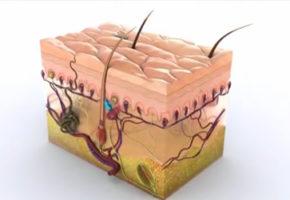 医学三维动画制作